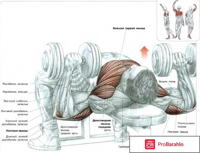 Упражнения с гантелями для грудных мышц мужчине