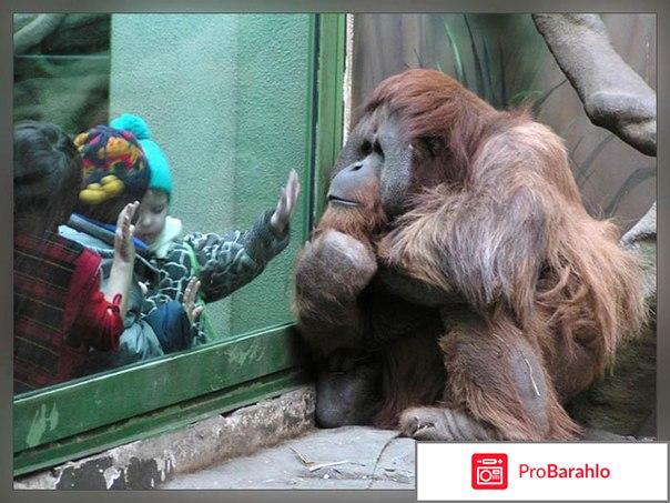 Зоопарк москва отзывы владельцев