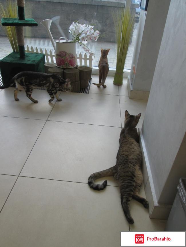 Музей кота отзывы владельцев
