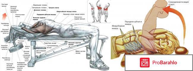 Упражнения с гантелями для грудных мышц мужчине обман