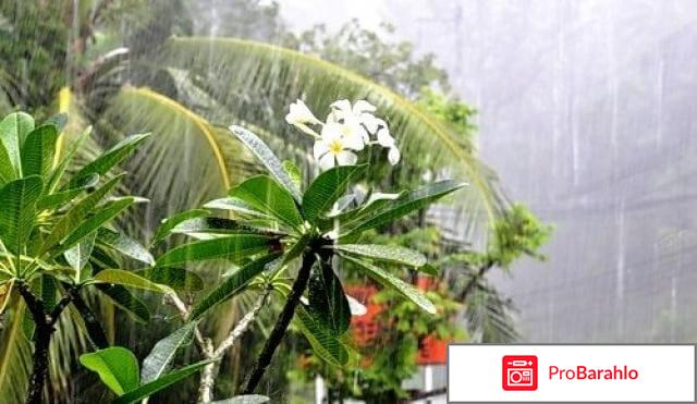 Погода в тайланде в августе отзывы туристов