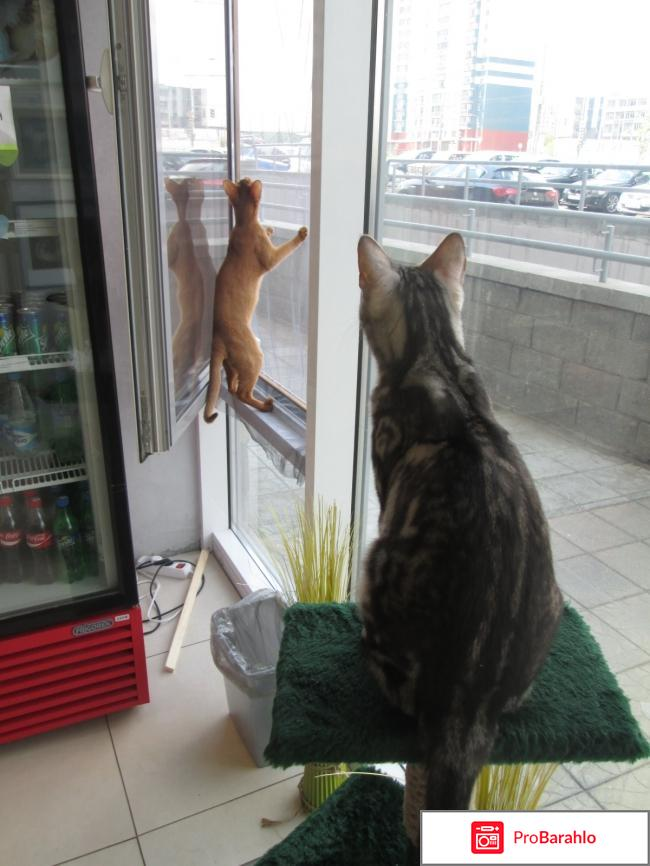 Музей кота обман