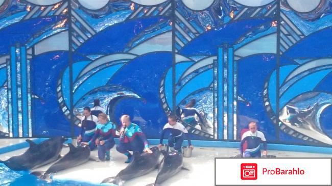Вместе с дельфинами отрицательные отзывы