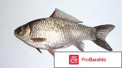 Рыбалка карась