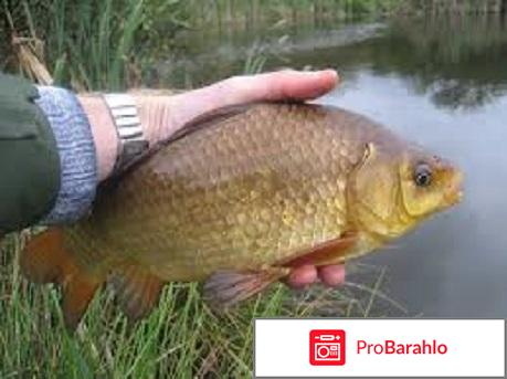 Рыбалка карась отрицательные отзывы