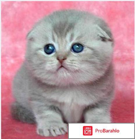 Корма для кошек супер премиум класса отрицательные отзывы