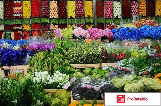 База цветов