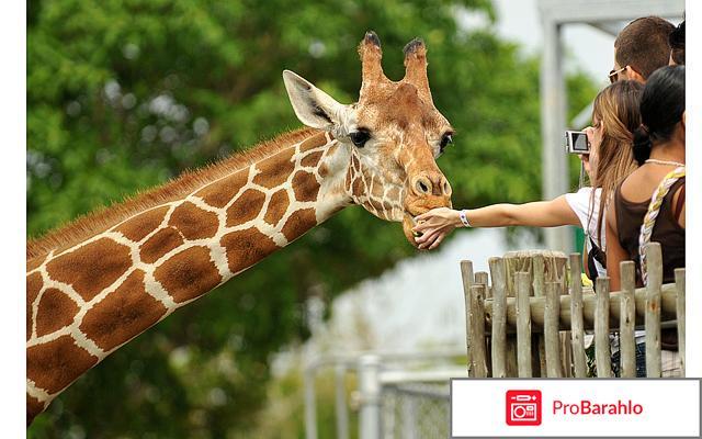 Зоопарк москва реальные отзывы