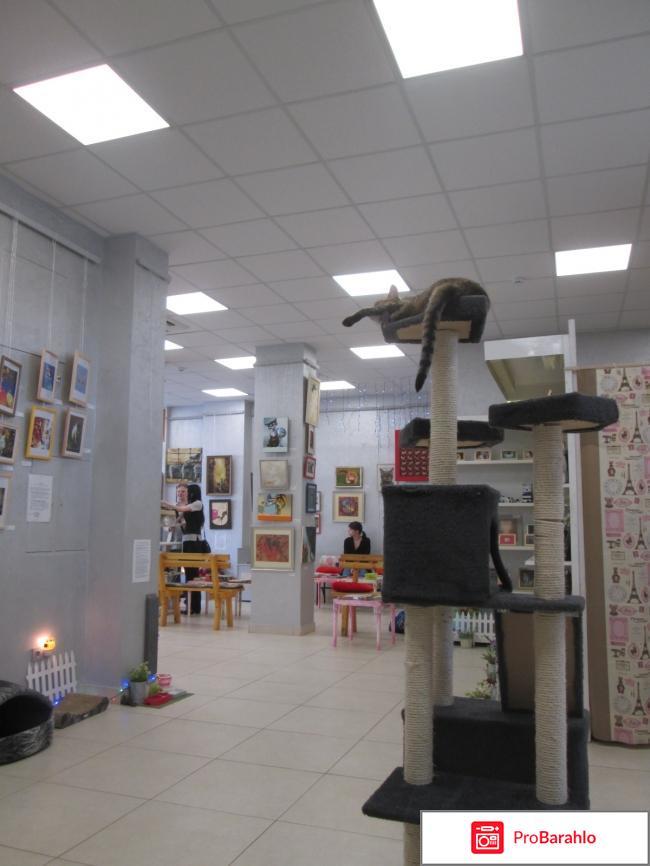 Музей кота фото