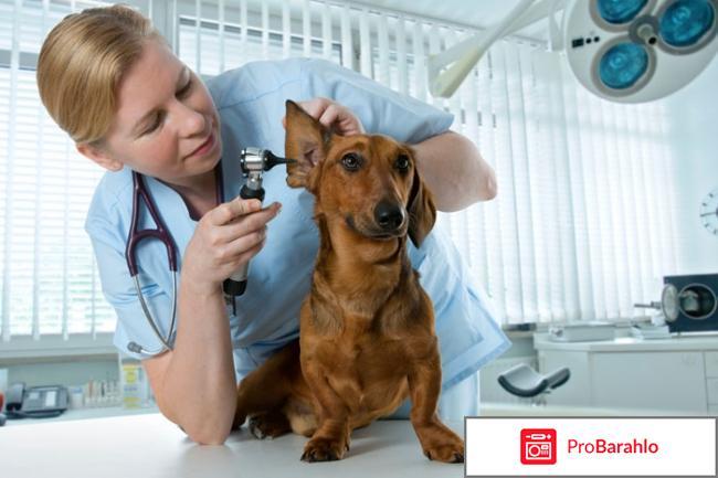 Ветеринарный центр Фирсова реальные отзывы