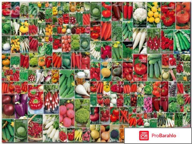 Купить семена почтой рф отрицательные отзывы
