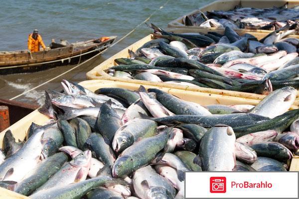 Активатор клева fishhungry официальный сайт отрицательные отзывы