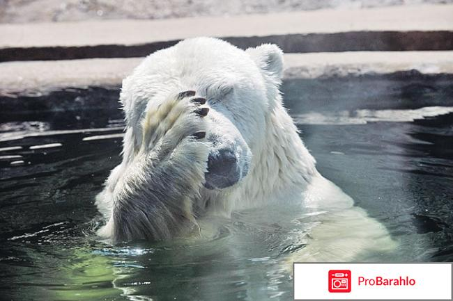 Зоопарк москва отрицательные отзывы