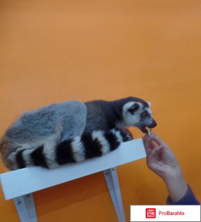 Трогательный зоопарк