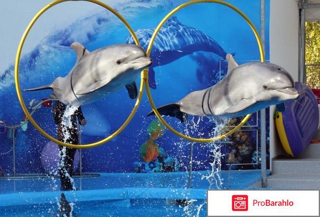 Вместе с дельфинами