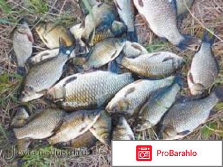 Рыбалка карась реальные отзывы