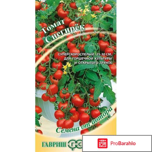 Штамбовые томаты обман