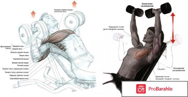 Упражнения с гантелями для грудных мышц мужчине отрицательные отзывы