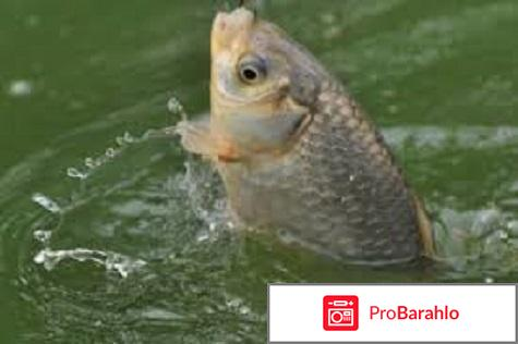 Рыбалка карась обман