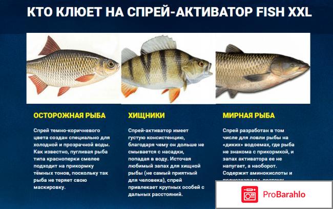 Fish XXL спрей для зимней рыбалки: цена, отзывы отрицательные отзывы